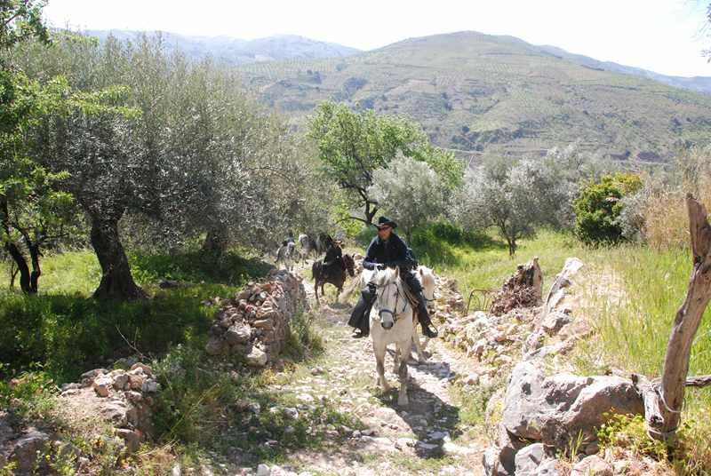 bubion-torvizcon-trek-20120415-181012-800x600