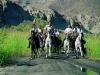 a_groop-galloping-in-the-rambla-800x600